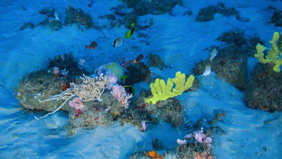 """Images of the Amazon Reef taken from a submarine launched from the MY Esperanza. The Greenpeace ship is currently in the region of the Amazon river mouth, Amapá State, for the """"Defend the Amazon Reef"""" campaign.  A team of experts are onboard, including the scientist from the Federal University of Rio de Janeiro, Fabiano Thompson and Kenneth Jozeph Lowick, from Greenpeace Belgium. Thompson led the group of scientists who discovered the coral reef at the mouth of the Amazon River. Imagens captadas do submarino dos Corais da Amazônia. Neste sábado, 28 de janeiro, o submarino foi lançado do navio Esperanza com o cientista da Universidade Federal do Rio de Janeiro Fabiano Thompson e Kenneth Jozeph Lowick, do Greenpeace da Bégica. Thompson liderou o grupo de cientistas que descobriu o recife de corais na foz do rio Amazonas. O lançamento do submarino envolveu grande parte da tripulação do navio. Esperanza, um dos três navios do Greenpeace, está na região da foz do rio Amazonas, no Amapá, para a campanha """"Defenda os Corais da Amazônia. O objetivo é observar debaixo d'água, pela primeira vez, os recifes de corais."""