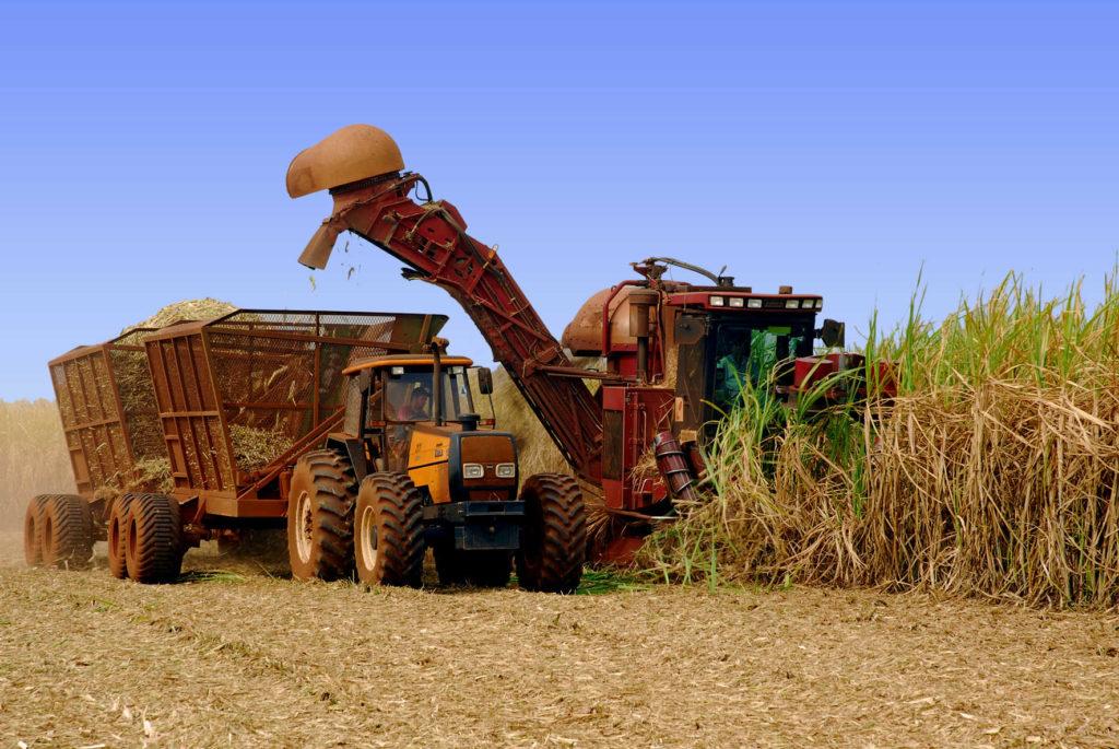 Colheita mecanizada nos campos da Usina Coruripe