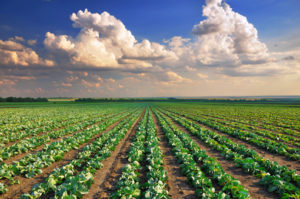 photo-chemical-purification-and-catalysts-agriculture