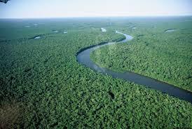 Mais de 85% da Floresta Amazônica são preservados